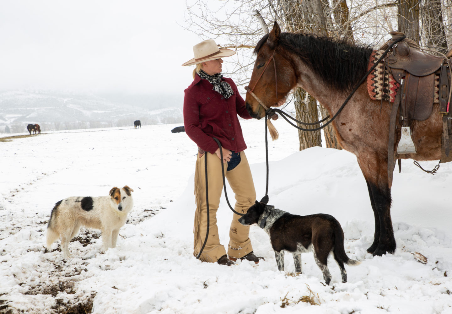 sky clark images in the snow with horse and dogs